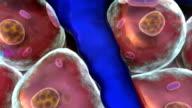 cell, artery video