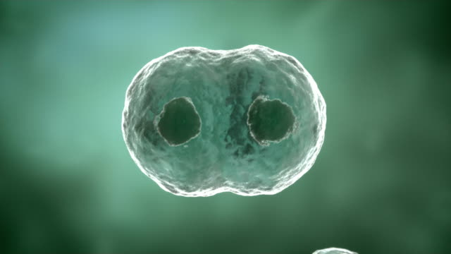 Cell dividing animation.HD video