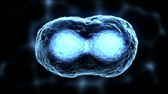 cell division or mitosis blue video