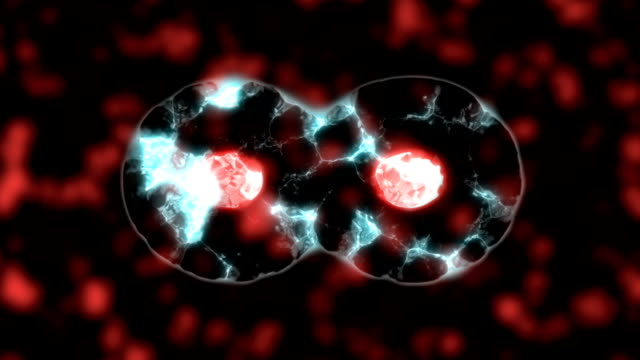 Cell division video