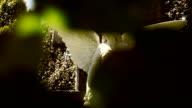 Cemetery Angel video