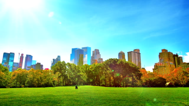 Central park and uptown. video