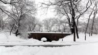 Central Park - Bridge, Snowing video