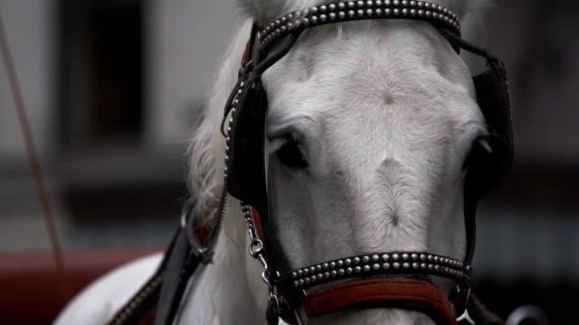 Central Park Horse Carriage closeup New York City video
