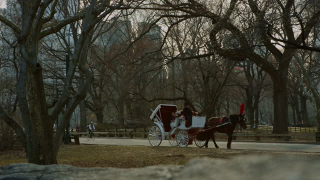 Central Park late afternoon with cars and taxies video