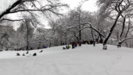 Central Park - Sled Groups Jumping video