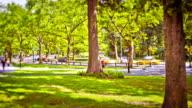 Central park. video