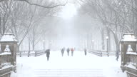 Central Park Winter Scenery New York City video
