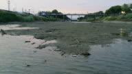 ChaiNat-Pasak Canal.Crisis Drought ,Lopburi Thailand. video