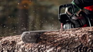 SLO MO DS Chainsaw bar cutting into a tree trunk video