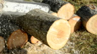 chainsaw blade cutting log of wood video