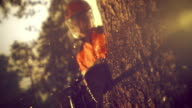 SLO MO LD Chainsaw cutting into a tree in sunshine video