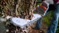SLO MO Chainsaw cutting into a tree video