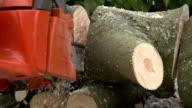 Chainsaw Cutting Logs video