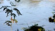 Chameleon on tree near the river video