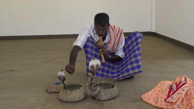Charming a cobra with a flute video