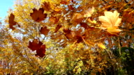 Charms Of Autumn In Slow Motion video