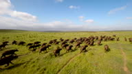 Chasing the herd across the plain video