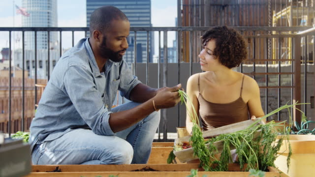 Cheerful Gardening Couple with Carrots video