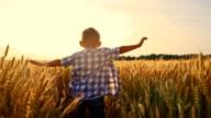 SLO MO Cheerful kid running in wheat field video