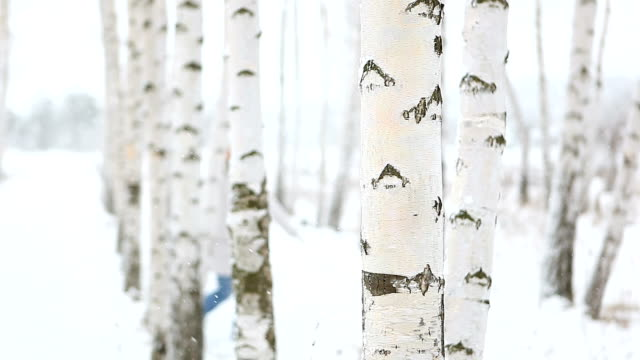 Cheerful young woman runs between birch trees in the winter video