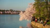 Cherry Blossom Festival Washington, DC video