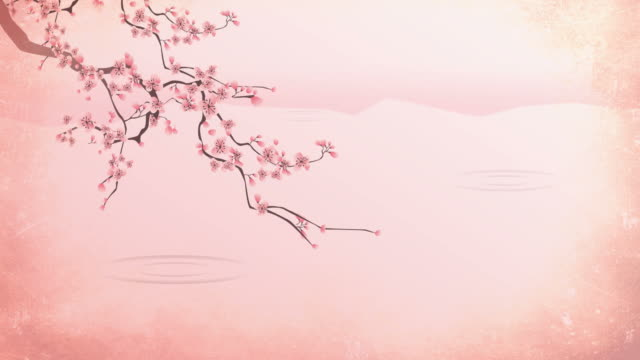 Cherry blossoms over water video
