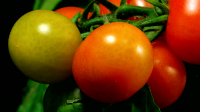 Cherry tomatos ripen video