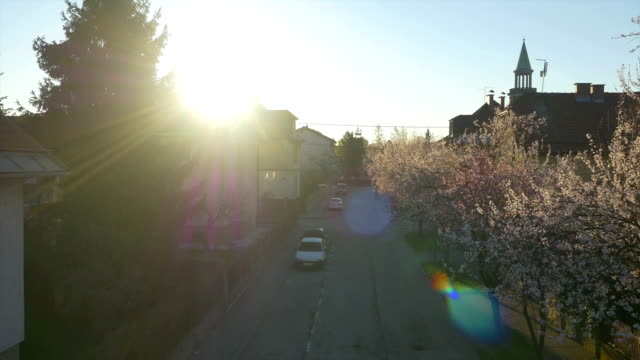 AERIAL: Cherry trees blooming in sunny suburbia video