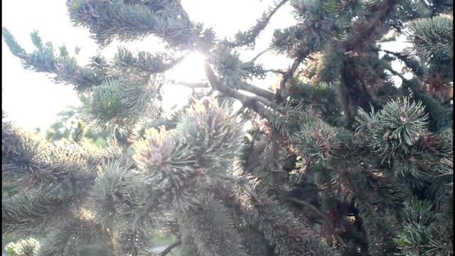 Chiaroscuro Christmas tree video