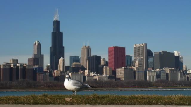 Chicago Skyline 4 video