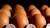Chicken eggs in carton tray. video