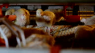 Chicken Farm poultry production video