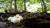 Chicken hatching eggs video