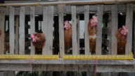Chickens in a cage at a poultry farm video