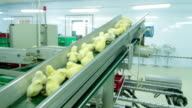 Chicks disinfection in Factory video