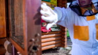Child beekeeper comes to the beehive to check on the bees video