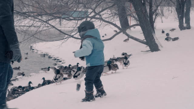 A child feeding the duks in winter park video