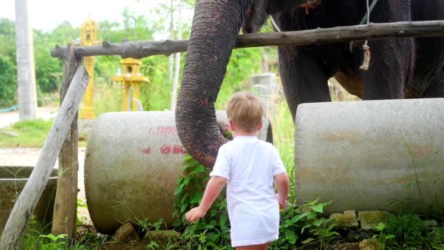 child feeding the elephant bananas. PHANGAN, THAILAND. video