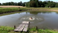 Child girl jump to pond water from wooden bridge and swim video