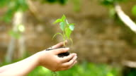 Child give to old man a soil with new plant-slowmotion video