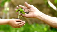 Child give to old man a soil with sapling-slowmotion video