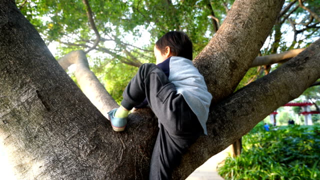Child on a tree video
