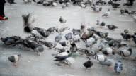 Child running among pigeons video