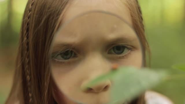 Child studies ladybird video