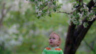 Child Trying to Get Branch of Blooming Tree video