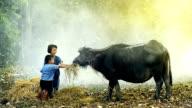 Children feeding buffalo video