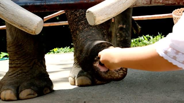 children feeding elephants video