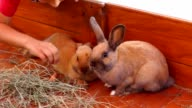 Children feeding rabbits video