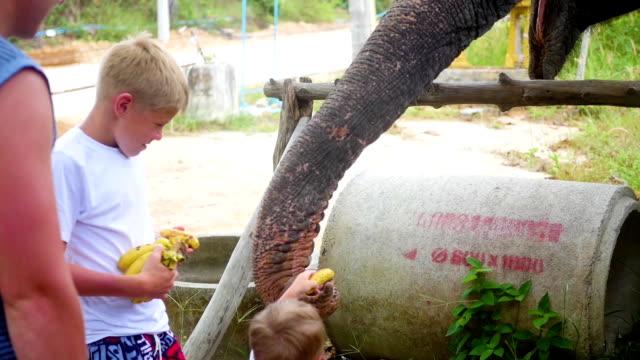 PHANGAN, THAILAND. Children feeding the elephant bananas video